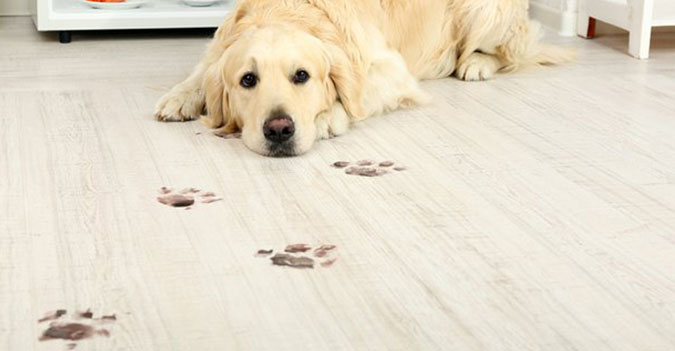 vusta pet friendly flooring ledbury
